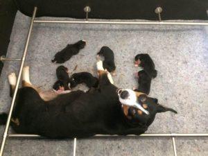 Bonnie vous présente ses 6 petits !