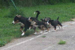 ils courent maintenant aussi vite que maman...