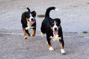 Nala et Bonnie : mère et fille